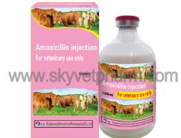 Amoxicillin Sulfate Powder