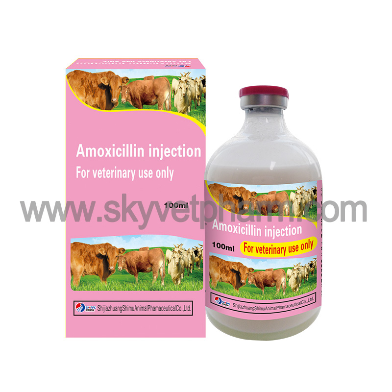 Amoxicillin injection