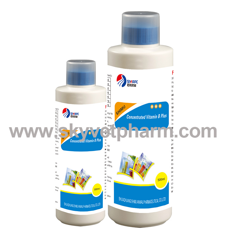 Concentrated Vitamin B Plus